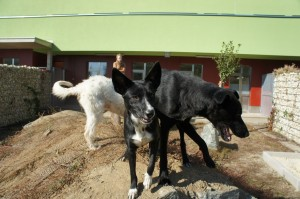 süße Tierheimhund bei Tiko