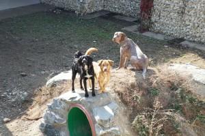 drei Hunde bei Tiko draußen