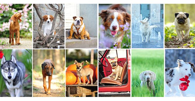 Hund Kalender