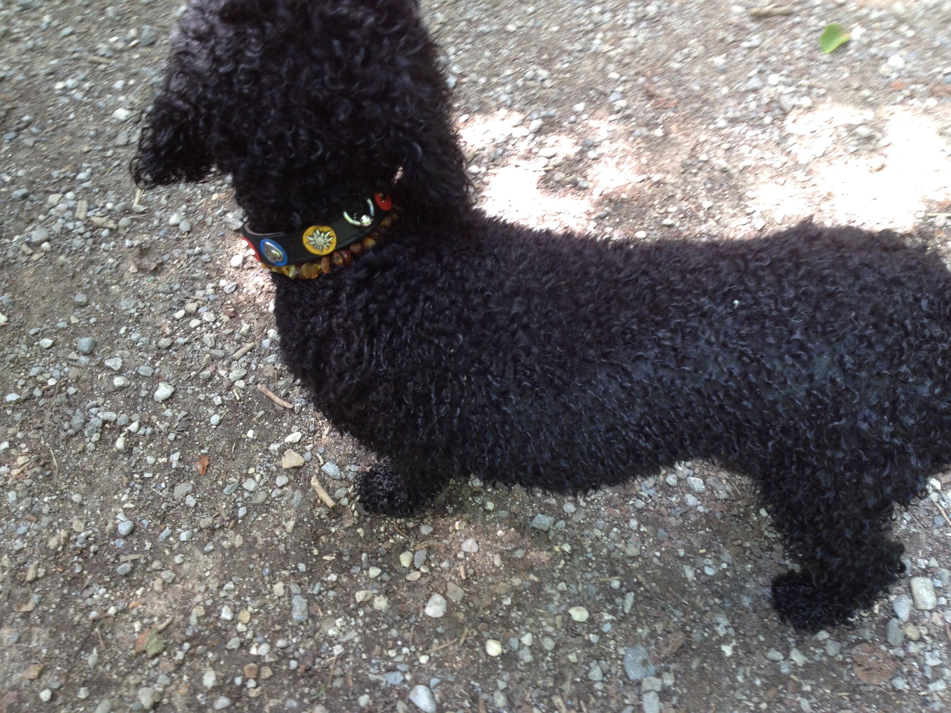 Hunde Accessoires – ein unmännliches Thema?