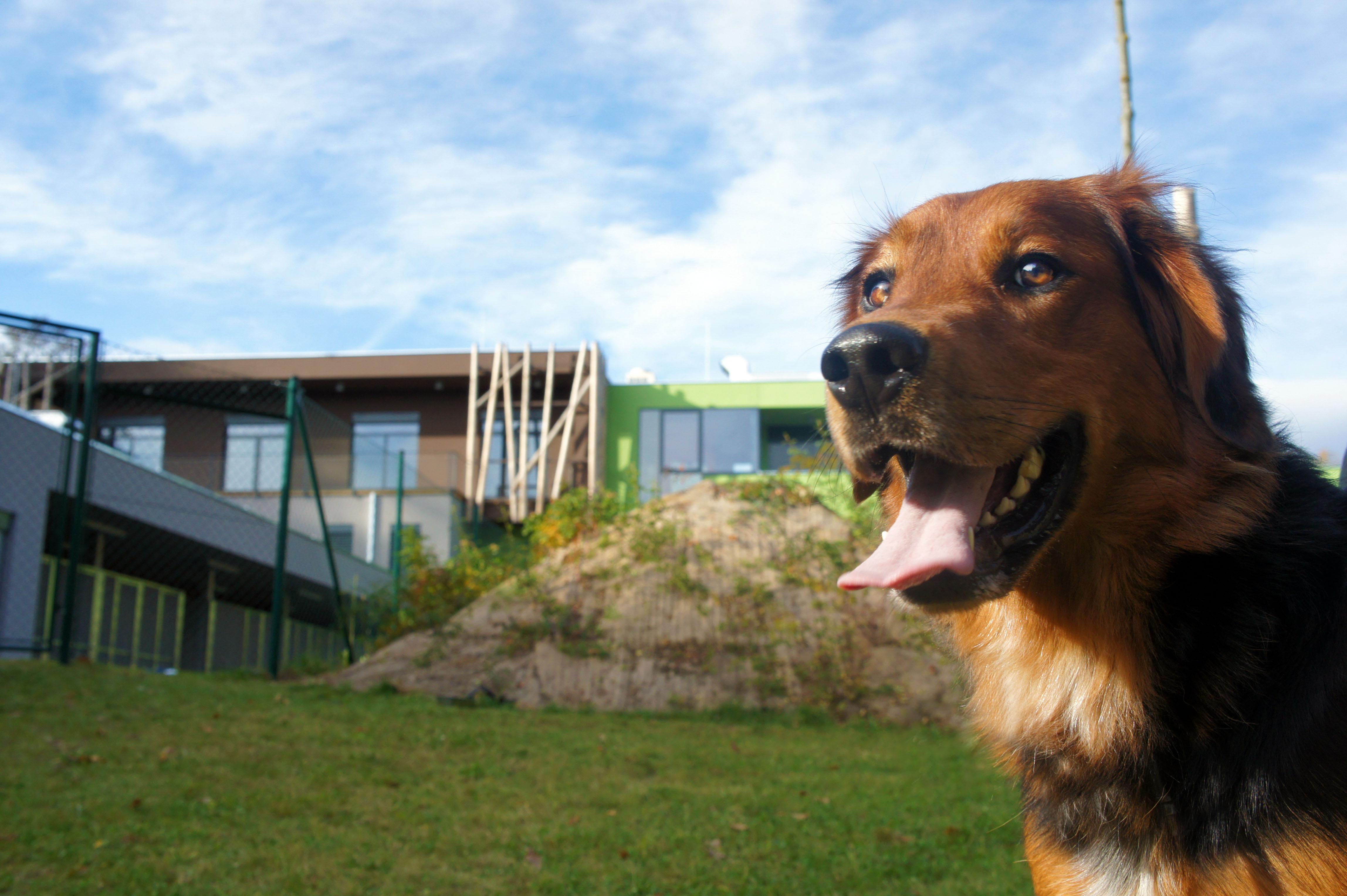 Hund bei Tiko auf dem Rasen