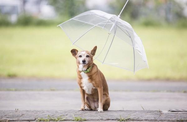 Irgendwie hat er ja schon was, der Hunderegenschirm: © Geheimshop.de
