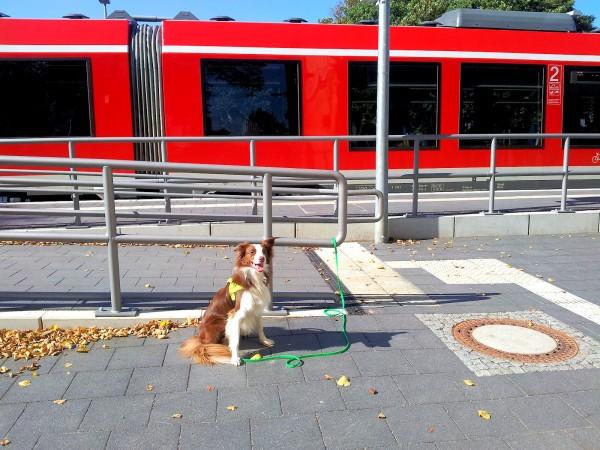 Hund Malaika vor einfahrendem Zug