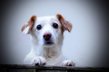 Bevor diese Hunde in den Himmel kommen, müssen sie die Hölle auf Erden ertragen