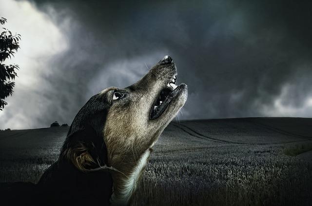VIP Hund trotzt dem Gewitter