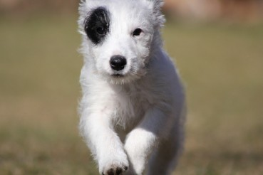 """""""Wer bin ich?"""" bzw dem Hund den Namen beibringen – Kommandos für Hunde"""