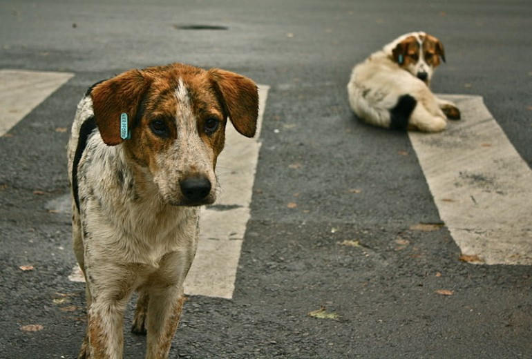 Kampf ums Überleben – Straßenhunde in Rumänien