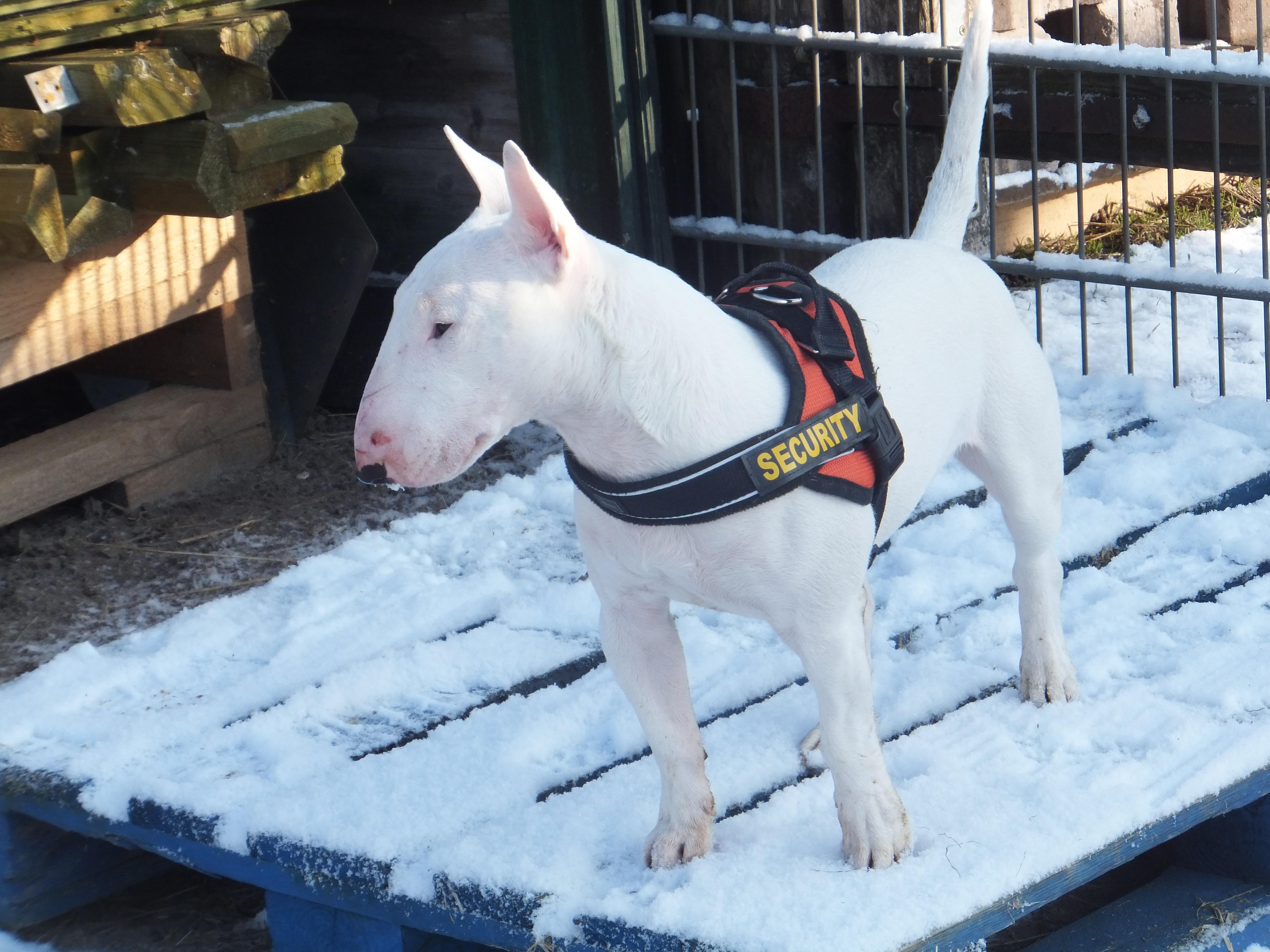 Erkältungskrankheiten beim Hund im Winter