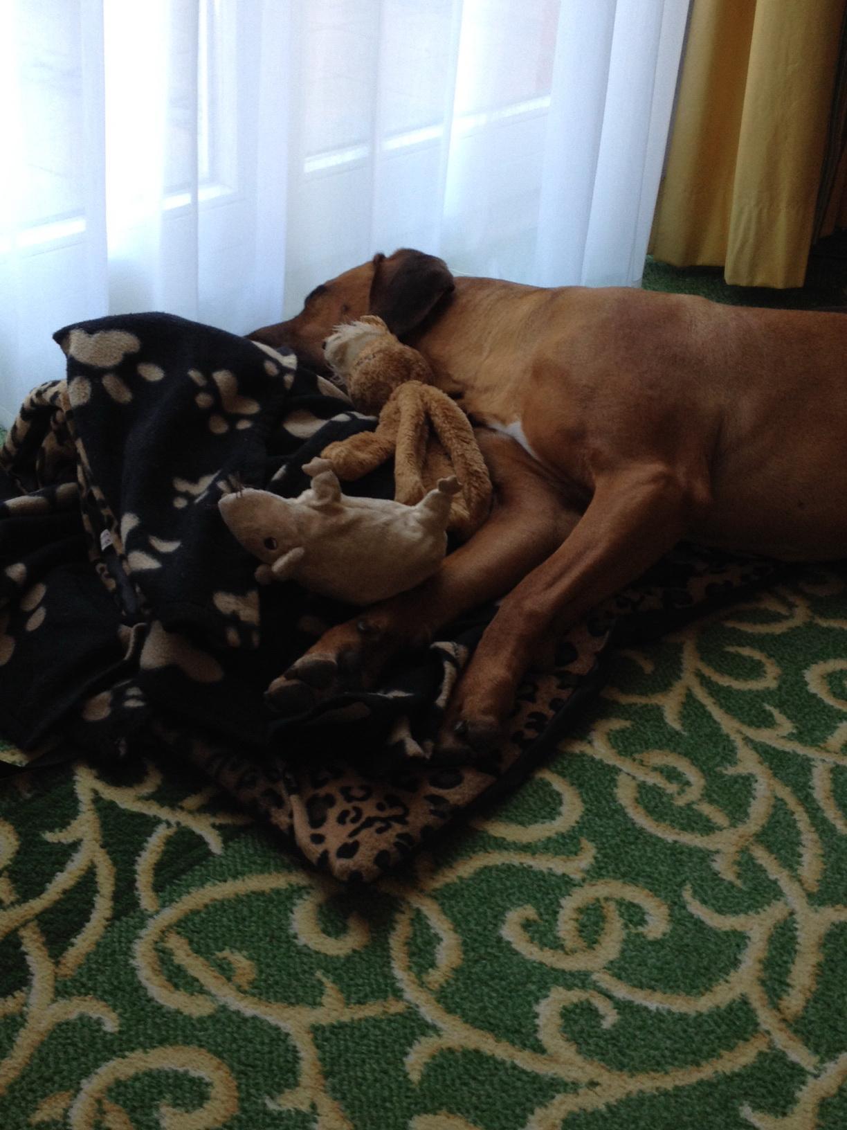 Hund Dayo im Hotel