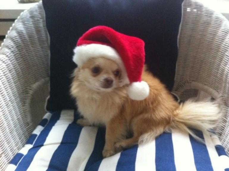 Die TOP-10 Weihnachtsgeschenke für Euren Hund
