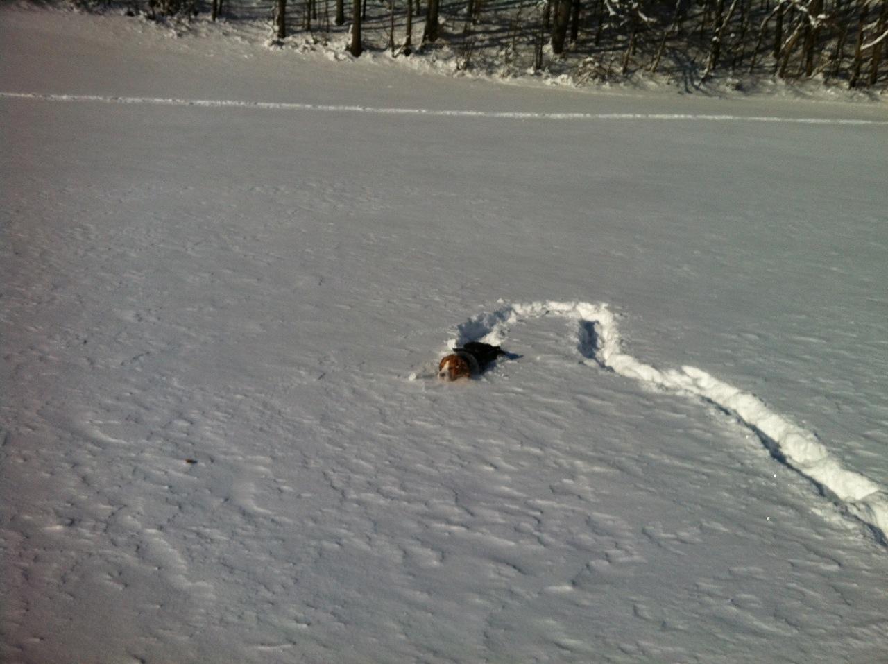 """mit Jaghunden im Schnee jagen """"üben"""""""