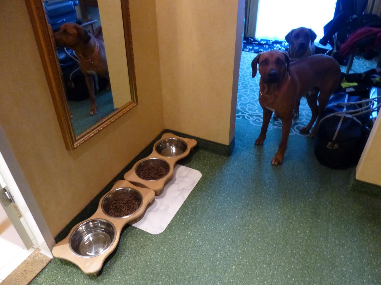 Zimmer werden auf Hundefreundlichkeit hin untersucht