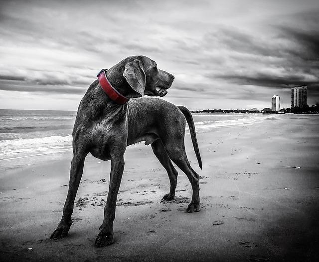 Hund bleibt Hund