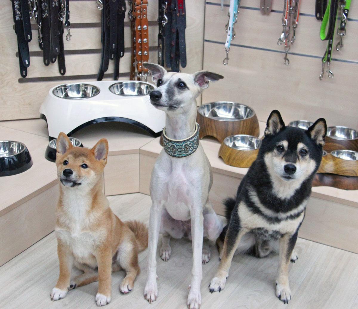 Pets Premium Bürohunde