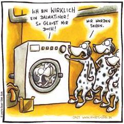 Dalmatiner wird gewaschen