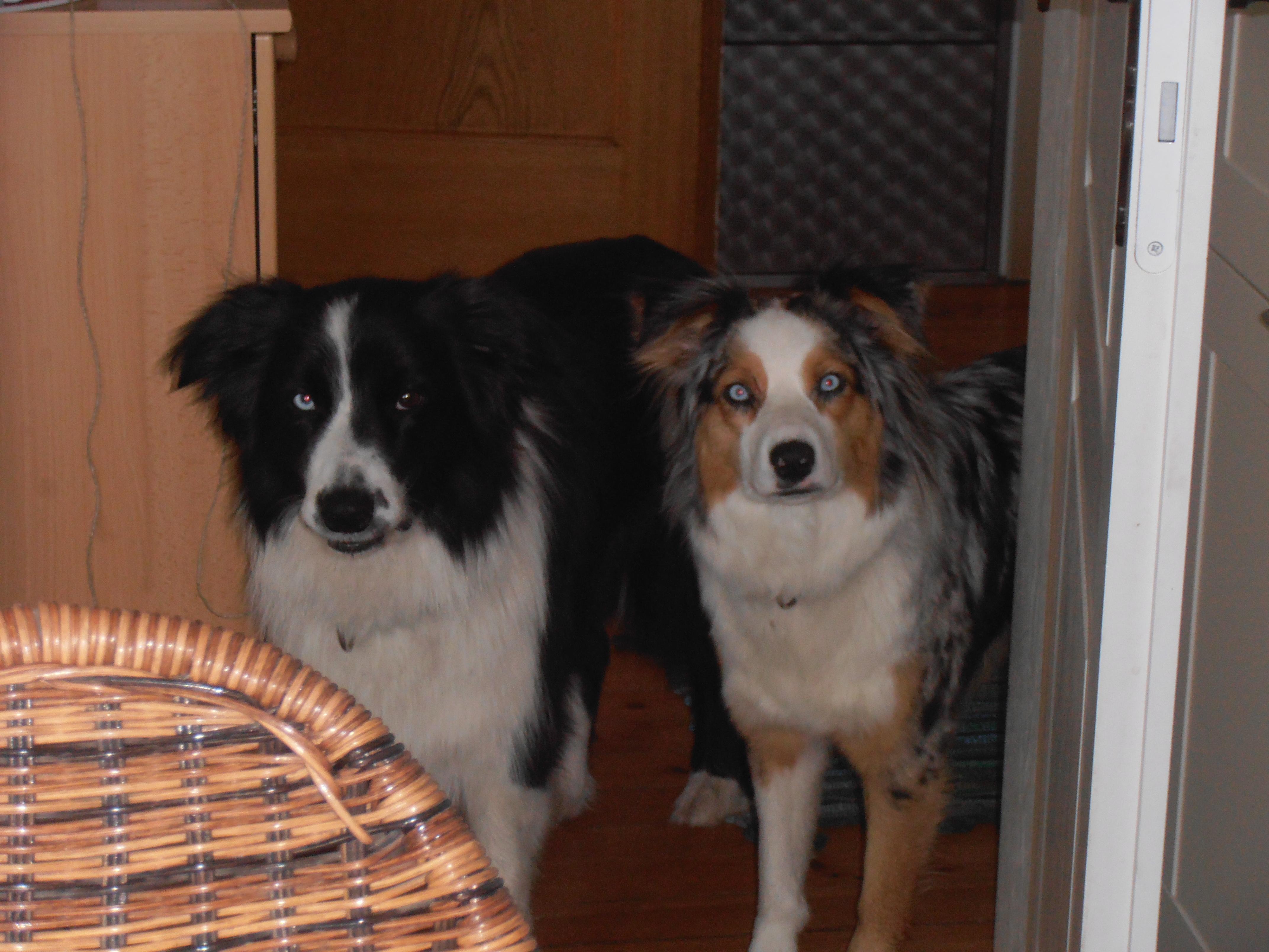 zwei Hunde in der Wohnungstür