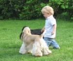1 Kind mit zwei Hunden auf der Wiese