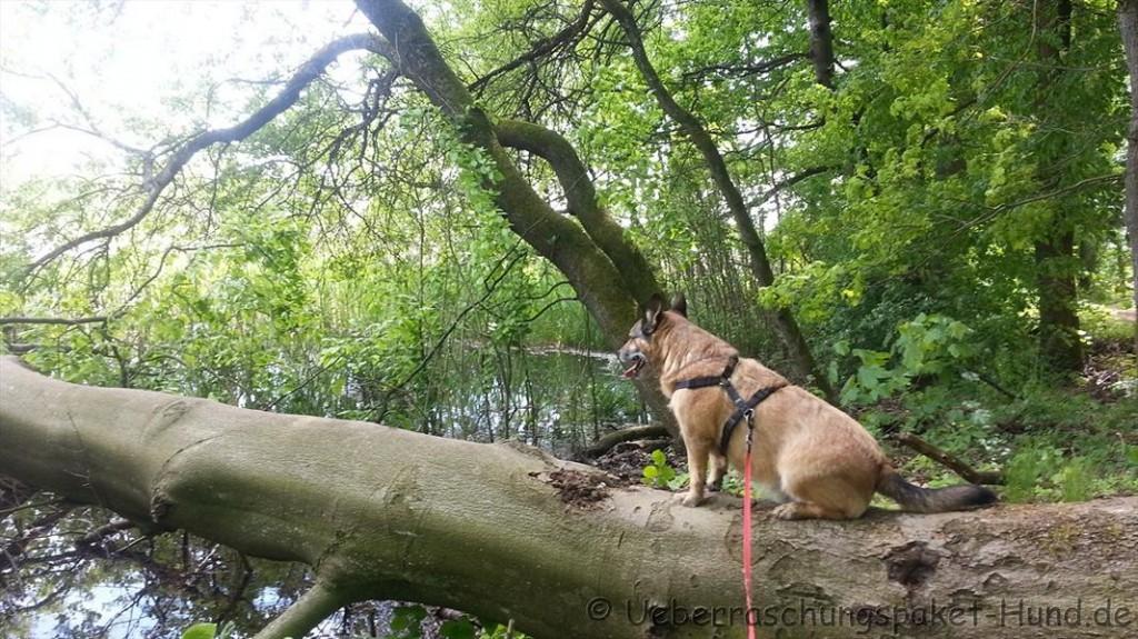Damon auf einem Baumstamm