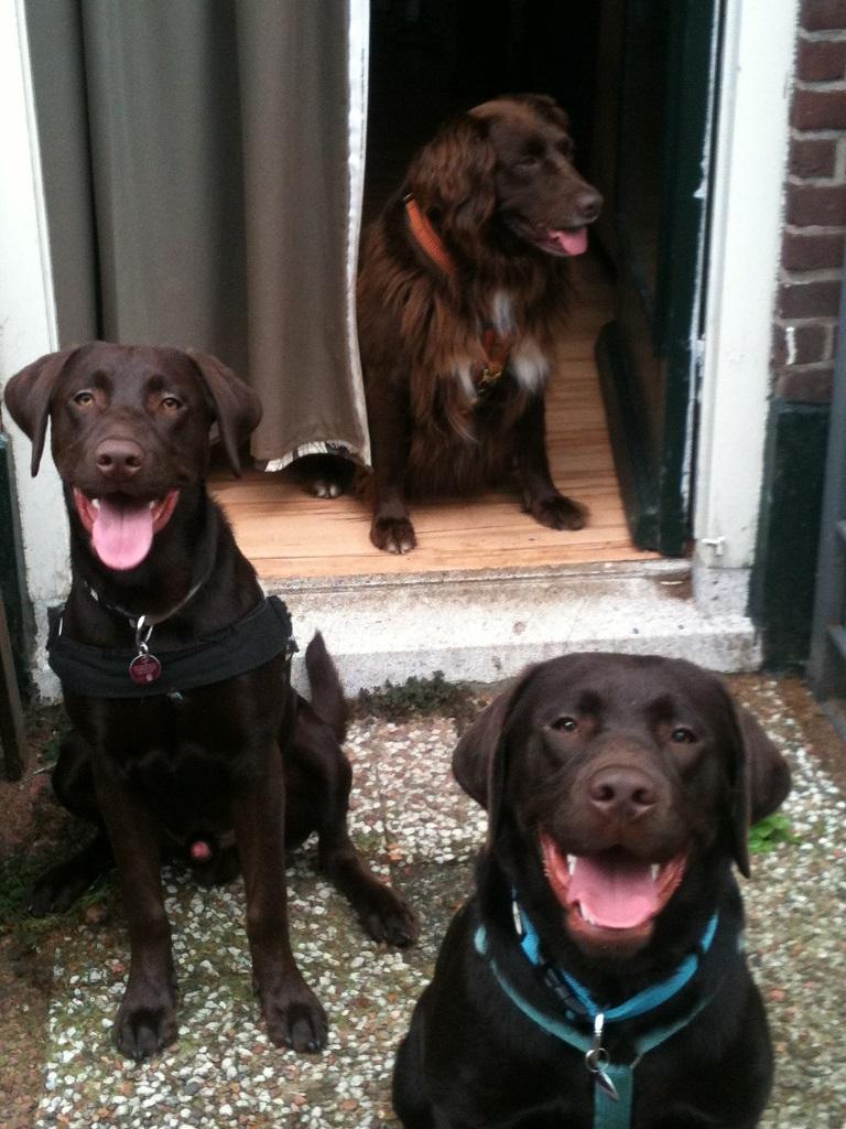 Murphy , Milo und Surcouf - die Hunde von Sabine Hermann