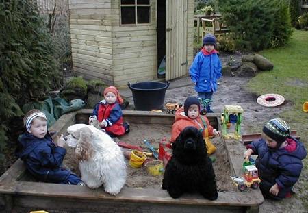 5 American Cocker Spaniel mit Kindern im Sandkasten