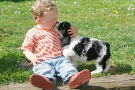 7 Hund schmust Kind