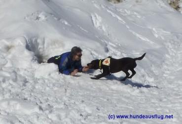 Ein Winterurlaub für den Hund…