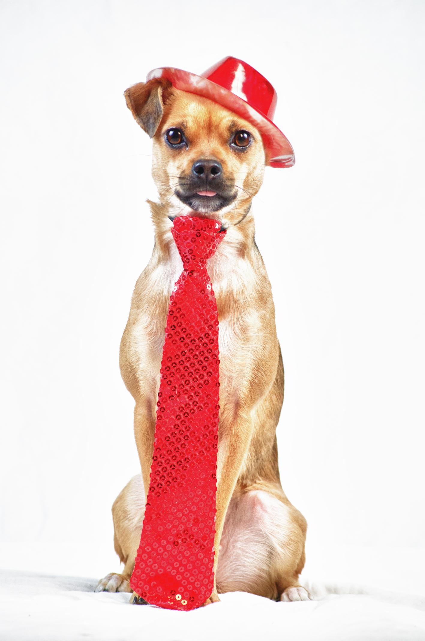 Hunde bei Silvester - verkleidet