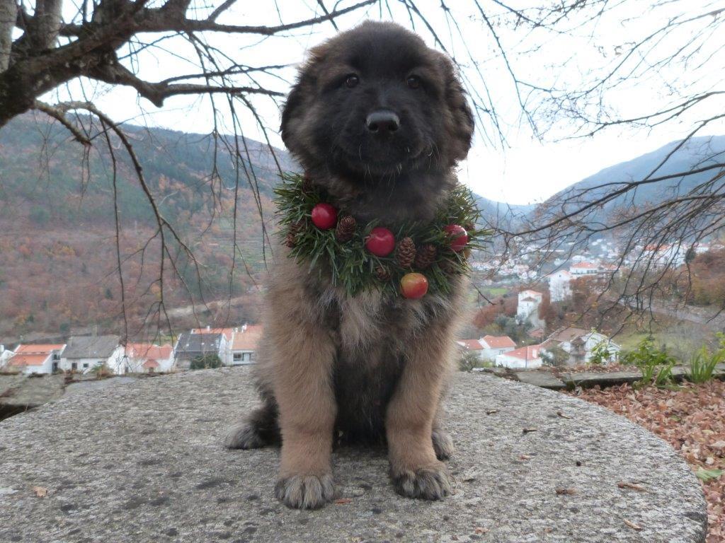 Hund in Portugal - Natal 2013