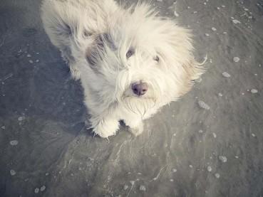 """Buchtipp: """"Julchen und das wilde Meer"""" – Hundestories von der Nordsee"""
