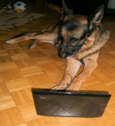 Nico, der erste bloggende Schäferhund der Welt