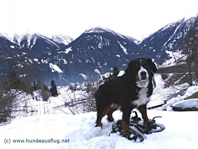 """Winterliches Hundewandererlebnis – vier """"Bigfoots"""" und vier Hundepfoten in den Osttiroler Bergen"""