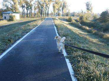 Hund entlaufen? So finden Sie ihn wieder!