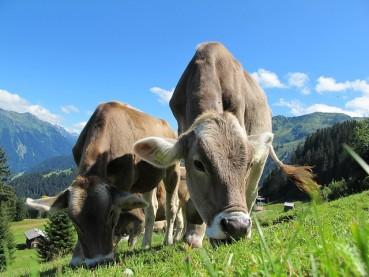 Hundetraining im Herzen  Kärntens (Österreich)!