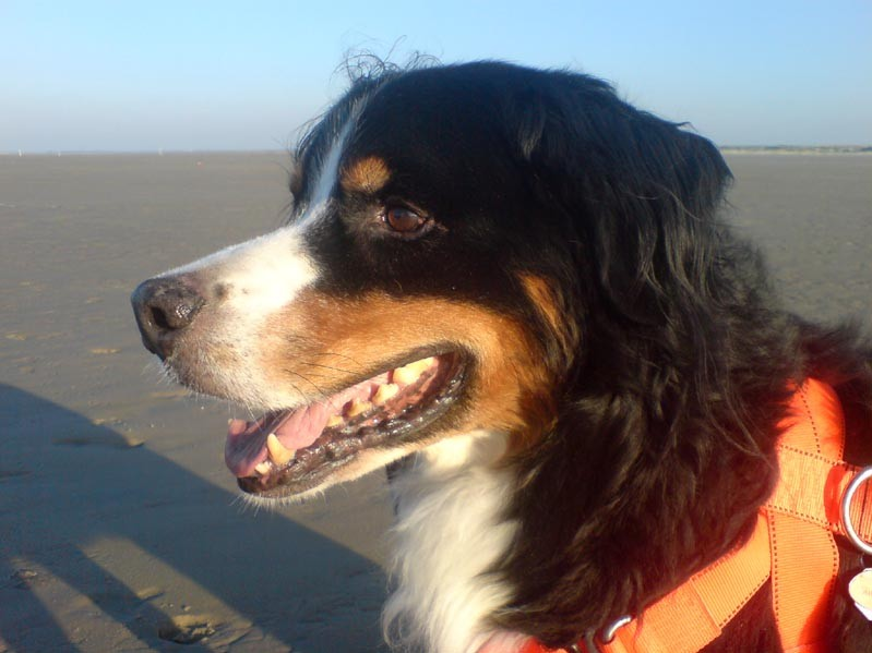 Bild 12 Hund am Strand