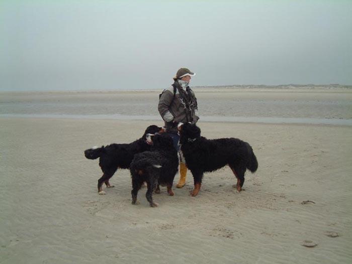 Bild10 drei Hunde am Strand