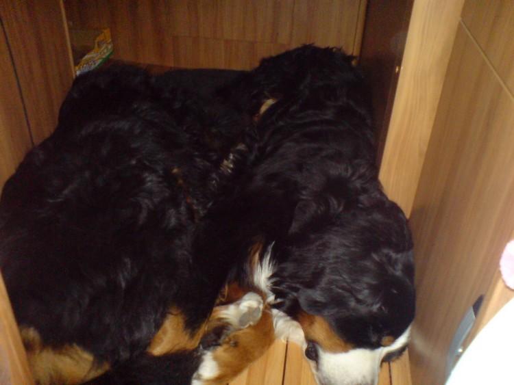 Bild18 Hunde im Wohnwagen