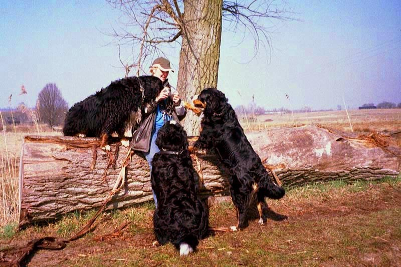 Bild2 - Hunde am Baumstamm