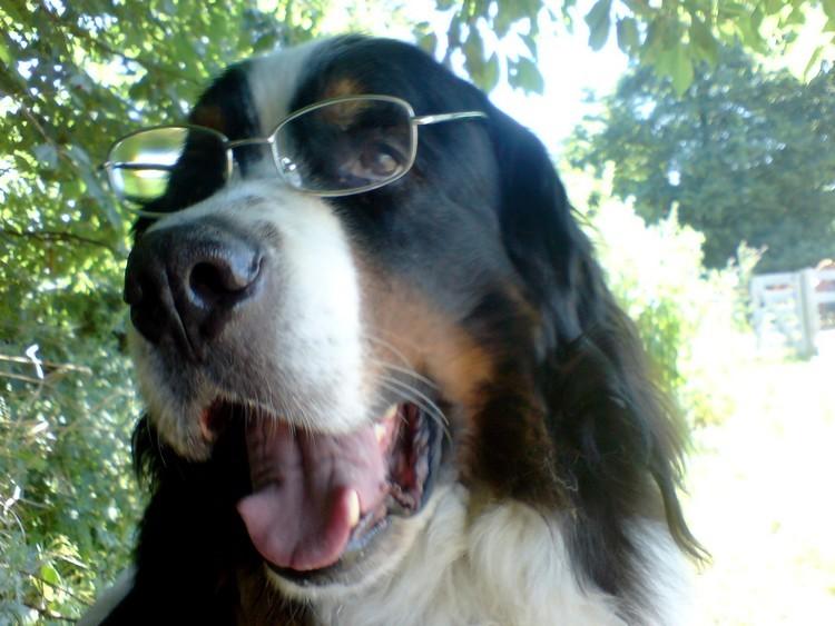 Bild6 Hund mit Brille
