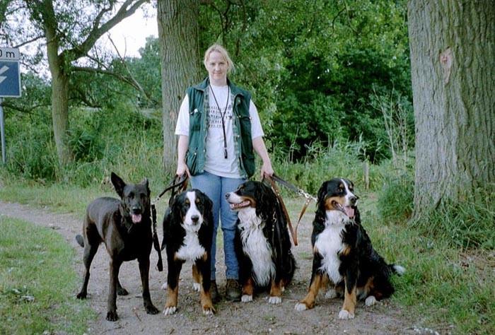 BildX - Hunderudel: vier Hunde an der Leine