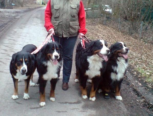 Erziehung - Hunderudel geht Gassi