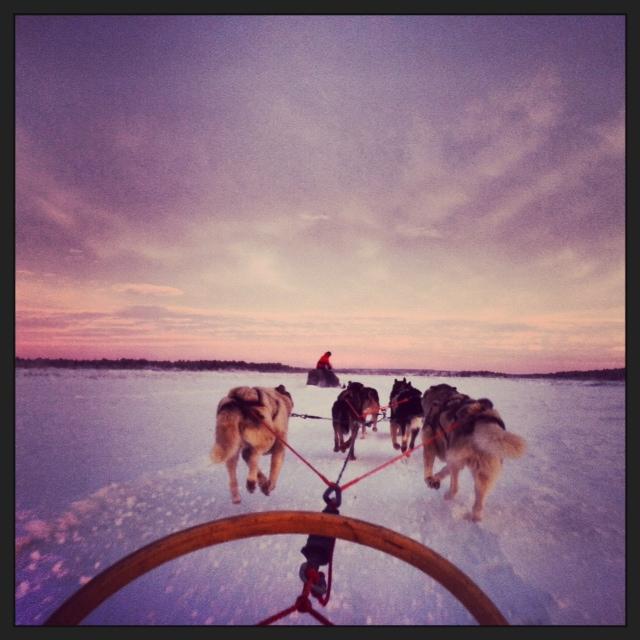 Schlittenfahrt mit Huskies ist eine der schönsten und anstrengsten Hundesportarten