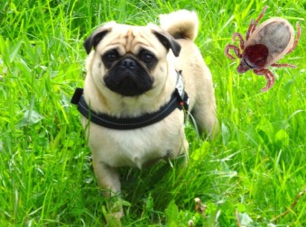 Tonys-Hunde-Blog, von Carmelo Barbagallo