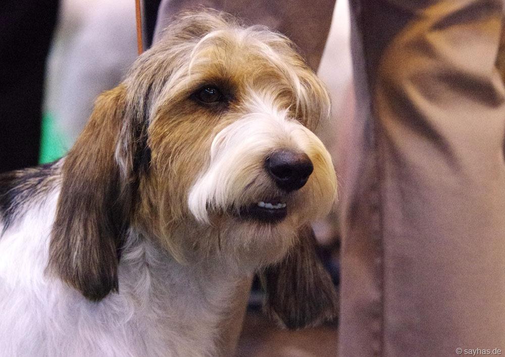 Hundeausstellung - 1 Hund
