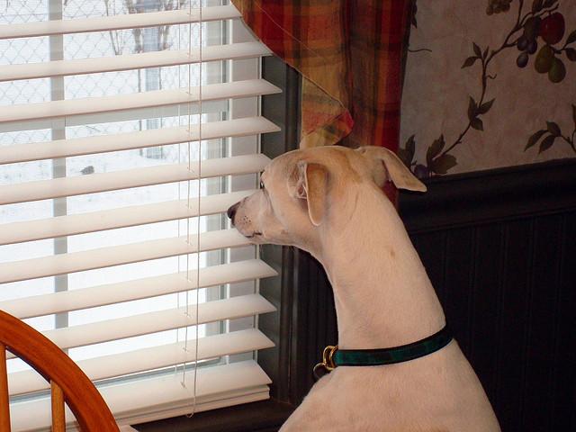 Hund guckt sehnsüchtig aus dem Fenster
