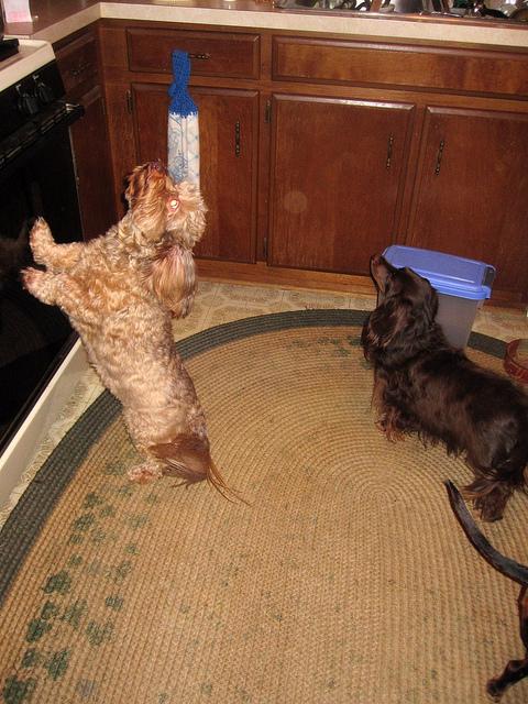 Hunde in der Küche