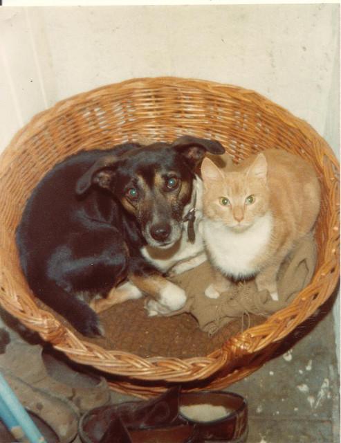 Hund und Katze im Korb
