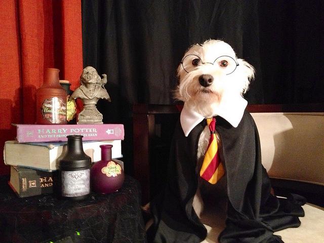 Harry Potter Hund