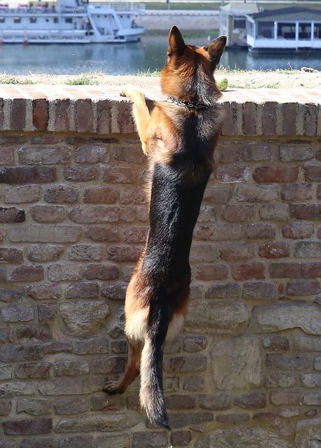 Hund klettert Wand hoch