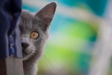 Warum Hunde und Katzen nie beste Freunde werden…