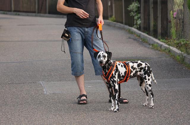 Brustgeschirr beim Hund